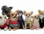 Ρούχα για σκύλους και γάτες
