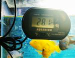Electronic thermometer for aquarium
