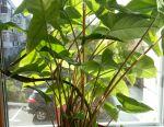 Εσωτερικά φυτά