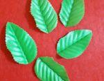 Yeşil yapraklar 2,5-3 cm