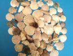 Seashells pachet (70pcs) + cadou