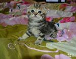 Pisicile sunt pliabile și drepte