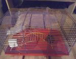 Cage for rodents