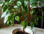 Kapalı bitki