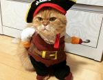 Clothes for cat