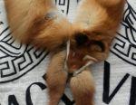 Boa (γούνινο φουλάρι) γούνας αλεπούς
