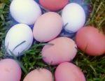 Free-range eggs are sold