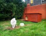 Ortalama bir köpek için tamburlu kabin