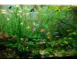 Fast Growth Aquarium