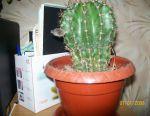 Cactus blooming.