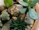 Florarium with succulents, mini-garden