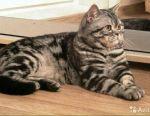 Вязка с плюшевым котом