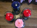 Un trandafir viu într-un balon decorează interiorul timp de 5 ani ...