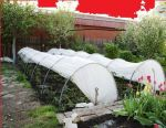 Greenhouse Snowdrop 6metrov