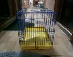Cages for hamsters