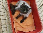 Стрижка котов кошек Груминг