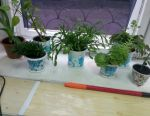 Indoor plants 6 pcs