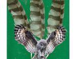 Пір'я птахів для рукоділля
