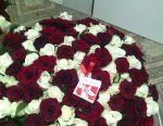 51, 101 roses