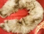 Arctic vulpe guler