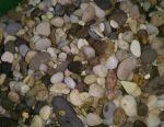 Soil for aquarium