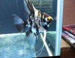 Акваріумні рибки, рослини, корми