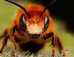 Η μελισσοκομία Karnika