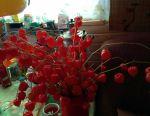 Φυτάρια φεσάλι (κινέζικα φανάρια)