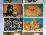 Postcards with cats