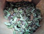 Τσάι βοτάνων Ιβάν-τσάι, μέντα, μαντζουράνα (matryoshka)