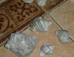 Shells sea 150 pcs.