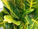 Croton Excellence