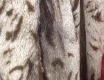 Pardoseala din piele de oaie este tăiată.