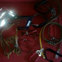 Leather harness with leashes