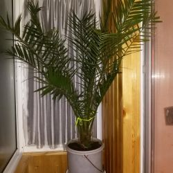 Palm for office