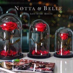 Розы в колбе Notta & Belle