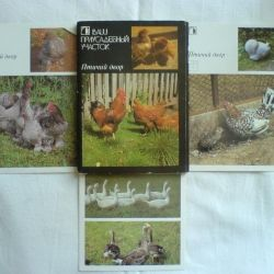 A set of cards Your garden