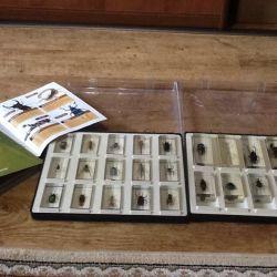 Коллекция насекомых.