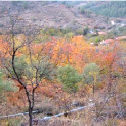 Lefkoşa, Tsakistra Köyü'nde bağ