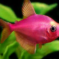 Найкрасивіші рибки тут