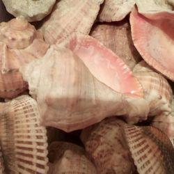 Θαλάσσια όστρακα