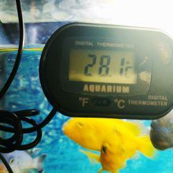 Термометр для аквариума электронный
