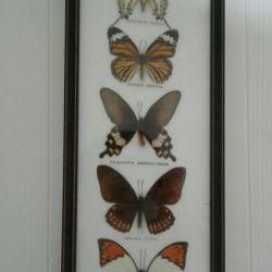 Συλλεκτικά πεταλούδες