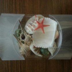 Bir dizi deniz kabukları)
