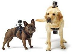 Animal mount for action cameras