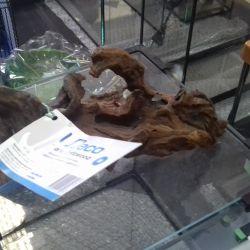 Natural driftwood UDECO