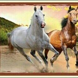 Παζλ Δύο άλογα 260