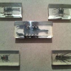 Camda böcekler