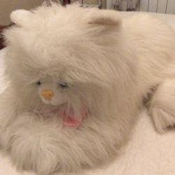 Yumuşak oyuncak kedi
