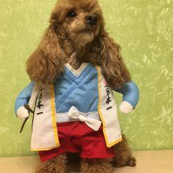 Dog costume carnival